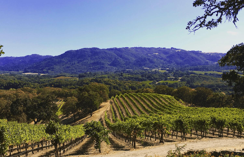Santa Rosa CA1